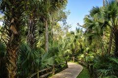 Passeio à beira mar de madeira na área de recreação na floresta nacional de Ocala situada em Juniper Springs Florida imagens de stock