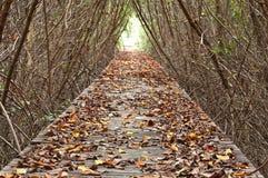 Passeio à beira mar entre a floresta dos manguezais Fotografia de Stock