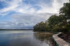Passeio à beira mar entre manguezais em Merimbula, Austrália Fotos de Stock Royalty Free