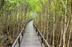 Passeio à beira mar na floresta dos manguezais Imagens de Stock