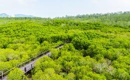 Passeio à beira mar na floresta dos manguezais Fotografia de Stock Royalty Free