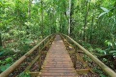 Passeio à beira mar na floresta Manuel Antonio Fotografia de Stock