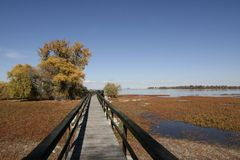 Passeio à beira mar no parque de estado do lago Barr Imagens de Stock
