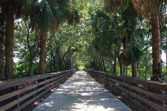 Passeio à beira mar sob árvores Cay Wetlands verde imagem de stock royalty free