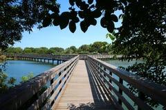 Passeio à beira mar sob árvores Cay Wetlands verde imagens de stock