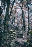 Passeio apedrejado quebrado na floresta do outono, filtro análogo fotos de stock