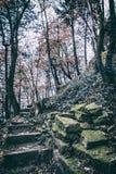 Passeio apedrejado quebrado na floresta do outono, filtro análogo fotografia de stock