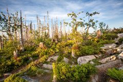 Passeio através da floresta selvagem na reserva natural da cordilheira de Sumava Fotografia de Stock Royalty Free