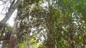 Passeio através da selva video estoque