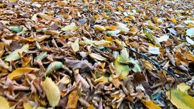 Passeio através das folhas no outono filme