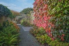Passeio através do jardim em cores bonitas do outono Imagem de Stock Royalty Free