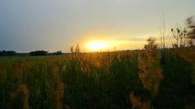 Passeio através da grama alta no por do sol vídeos de arquivo