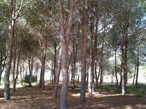 Passeio calmo dos pára-sóis do brilho do sol da floresta das árvores equilibrado apoiado Foto de Stock