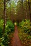 Passeio coberto de vegetação em um jardim do verão Fotografia de Stock