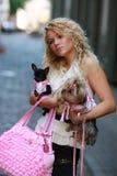 Passeio com cães Imagem de Stock Royalty Free