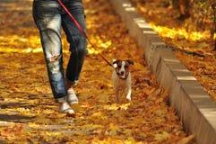 Passeio com o cão fotografia de stock