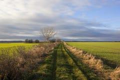 Passeio com trigo Foto de Stock