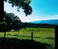 Passeio da bicicleta de montanhas do smokey de Tennessee Fotografia de Stock