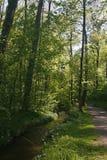Passeio da floresta com pouco ribeiro imagem de stock
