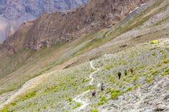 Passeio da montanha e grupo brancos de caminhantes imagens de stock