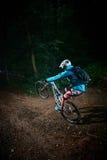 Passeio da noite na floresta Imagens de Stock Royalty Free