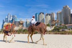 Passeio de oferecimento do camelo do homem na praia de Jumeirah, Dubai, Emiratos Árabes Unidos Imagem de Stock Royalty Free