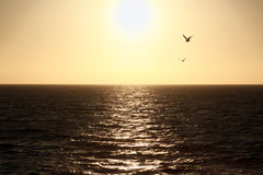 Passeio do barco do por do sol de Catalina Island ao continente Imagens de Stock