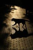 Passeio do cão Fotografia de Stock