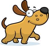 Passeio do cão pequeno Imagens de Stock Royalty Free
