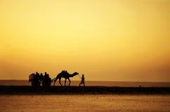 Passeio do camelo fotografia de stock royalty free
