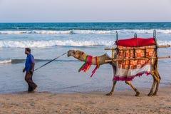 Passeio do camelo na costa de mar foto de stock royalty free