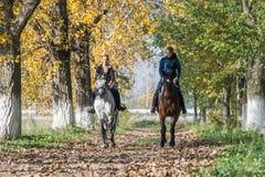 Passeio do cavalo Fotografia de Stock