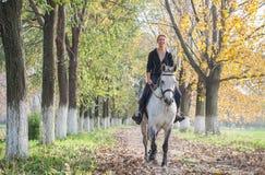 Passeio do cavalo Fotos de Stock