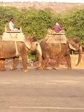 Passeio do elefante foto de stock