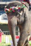 Passeio do elefante fotografia de stock