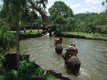 Passeio do elefante através da lagoa em Bali, Indonésia Imagem de Stock Royalty Free