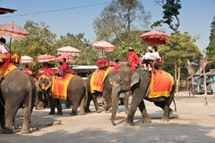 Passeio do elefante de Tailândia Imagem de Stock