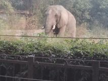 Passeio do jardim zoológico foto de stock