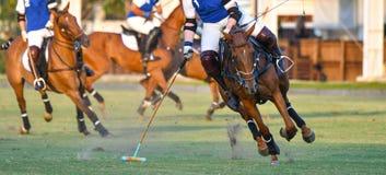 Passeio do jogador do cavalo do polo fotografia de stock royalty free