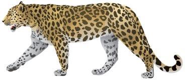 Passeio do leopardo ilustração stock