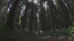 Passeio do skater na floresta vídeos de arquivo