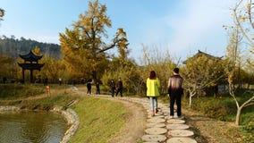 Passeio do vale do biloba da nogueira-do-Japão Fotografia de Stock