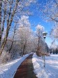 Passeio e trajeto do passeio da bicicleta, Lituânia Imagens de Stock