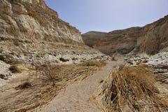 Passeio em a montanha da garganta do deserto após a inundação. imagem de stock royalty free