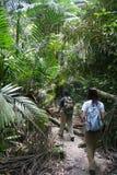 Passeio em a montanha da selva Foto de Stock