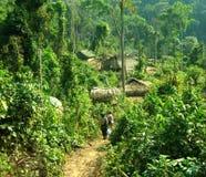 Passeio em a montanha da selva Foto de Stock Royalty Free