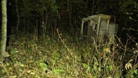 Passeio em uma floresta escura estranha com névoa filme