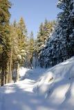 Passeio em uma floresta nevado Fotografia de Stock