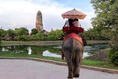 Passeio estrangeiro do elefante dos turistas para visitar Ayutthaya fotografia de stock