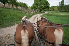 Passeio marrom de dois cavalos engatado a um transporte fotografia de stock royalty free